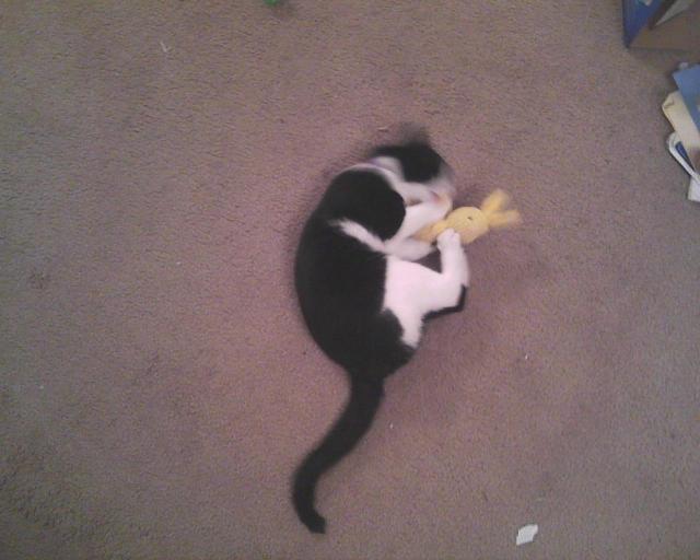 lapin à l'herbe-aux-chats