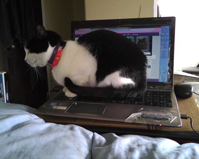 assise sur l'ordinateur