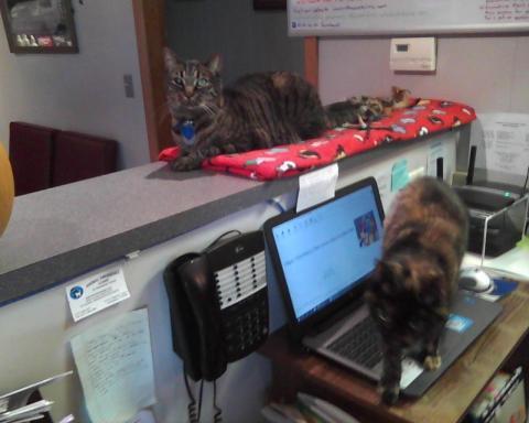 Mercy la chatte écaille de tortue s/ordinateur