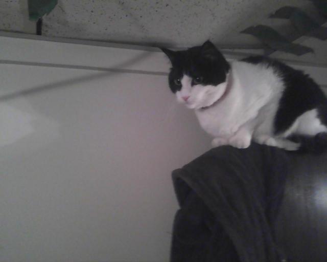 chat sur la porte