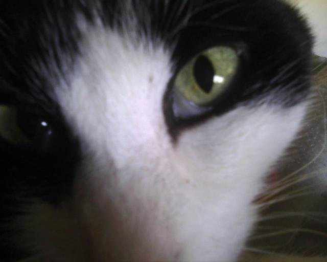 les yeux de Parker-la-Jolie