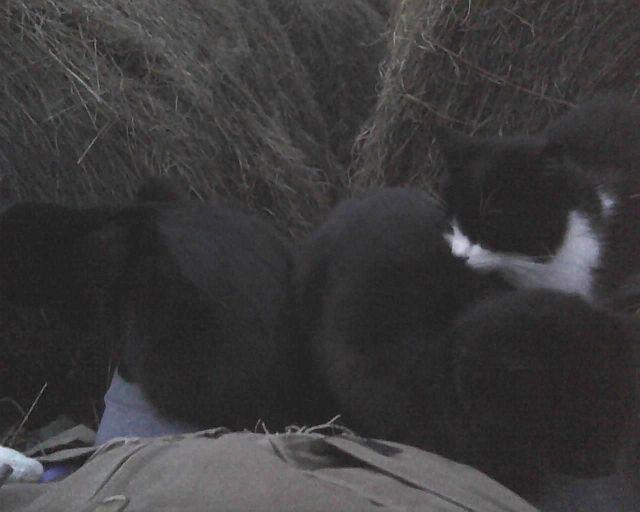 trois chats aux genoux de l'humain