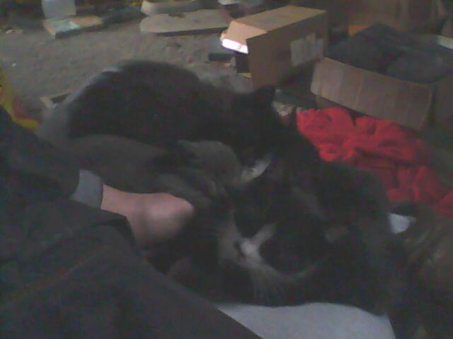 cinq chatons partageons les genoux de notre humain