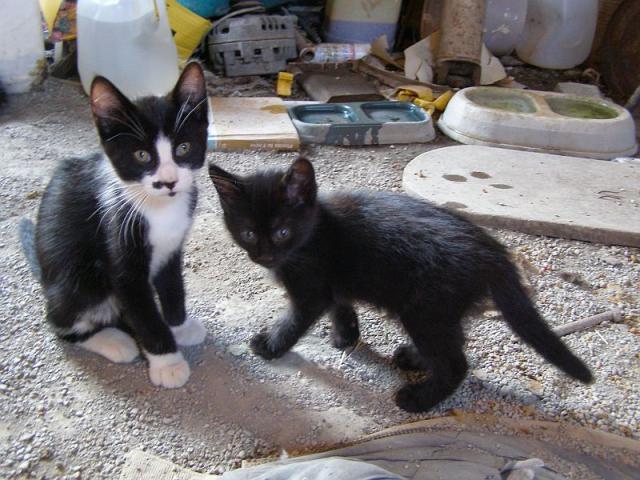 Le Valet et Blackie-Fille