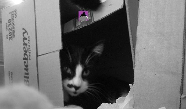 moi dans la boîte