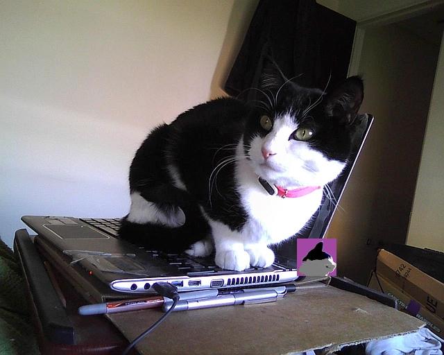 chat sur l'ordinateur encore