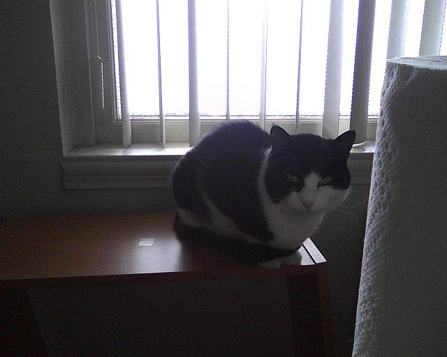 chat qui me regarde