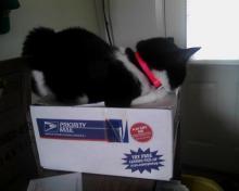chat sur boîte postale