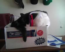 endormie sur la boîte