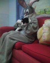 chat qui sortirait des genoux du lapin-de-Pâques