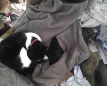 chat sur un parka