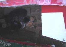 chatons dans une boîte