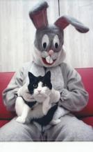 chat et lapin-de-Pâques