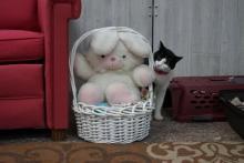 chat et lapin en pelouche