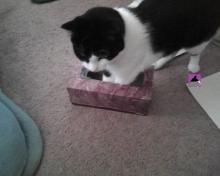 chat dans boîte des mouchoirs