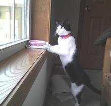 chat qui mange près d'une autre fenêtre