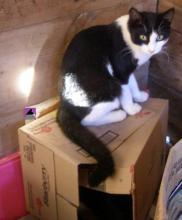 chat sur boîte au cabanon