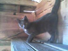 chat sur l'étagère