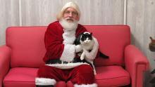 père Noël avec chat