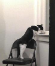 chat qui mange près de la fenêtre