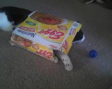chat qui détruit boîte des gauffres