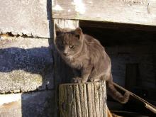 Amical sur un poteau